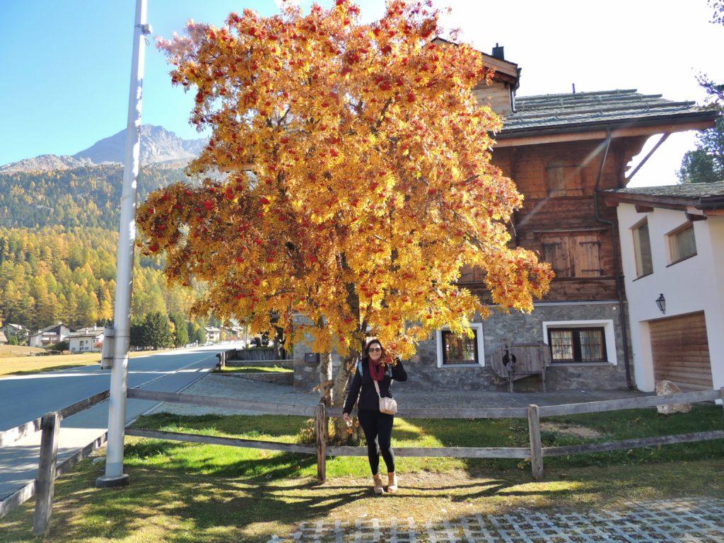 Outono em Silvaplana - Suíça