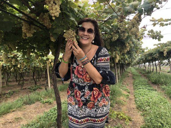https://viajecomnorma.com.br/wp-content/uploads/2019/08/Vapor-do-vinho-Vinicola-Terra-Nova-Miolo-o-parreiral.jpeg
