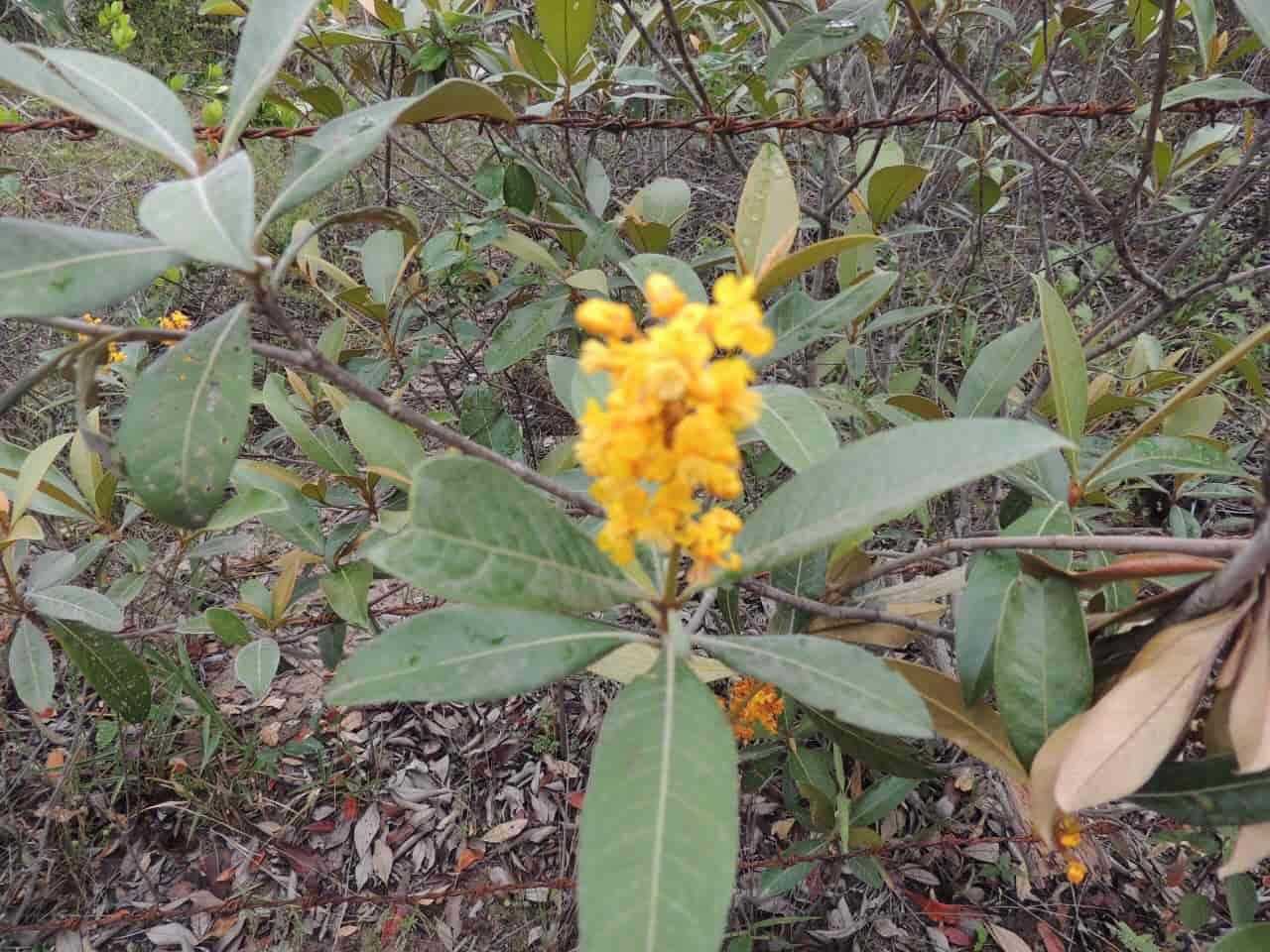 A Flora na trilha da Cachoeira do Rio Preto - Vale do Capão