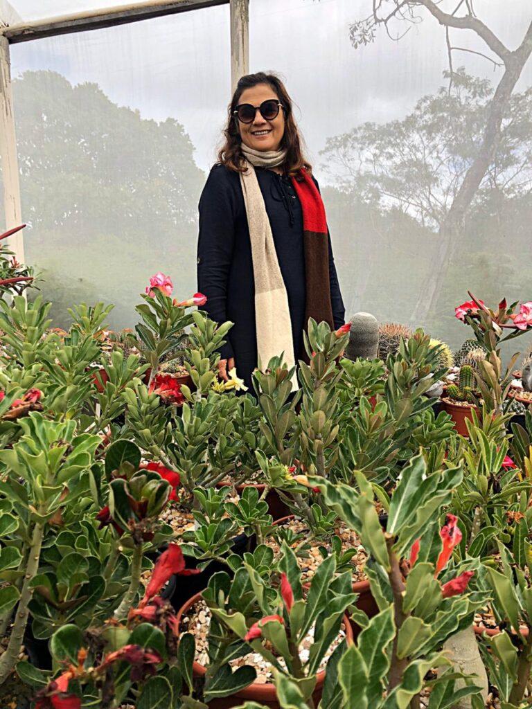 Rosa do Deserto em Morro do Chapéu - Ba