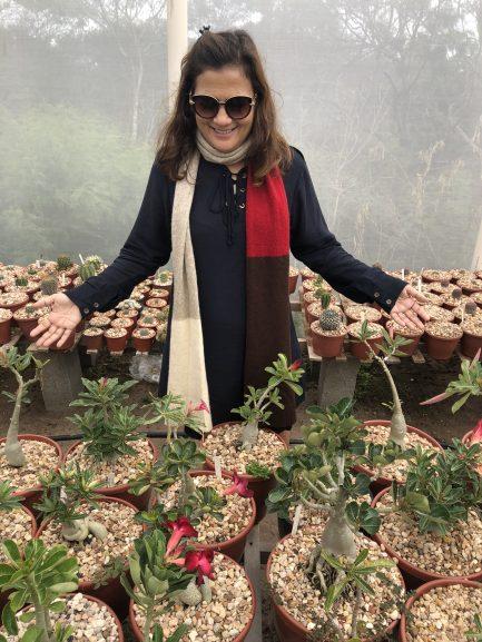 Sitio Adenium, produtor da Rosa do Deserto em Morro do Chapéu