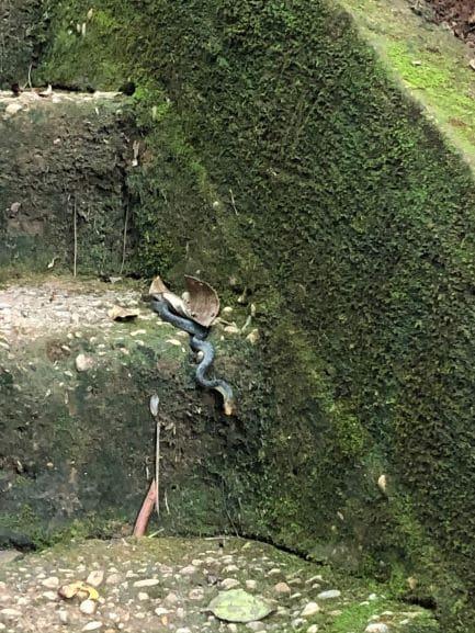 Um encontro inusitado na trilha que leva as cachoeiras
