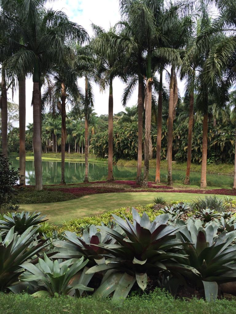 Instituto Inhotim - Brumadinho MG, Um lindo jardim botânico e Centro de Arte Contemporânea