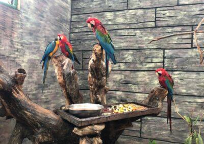 Maragogi Alagoas - O Caribe Brasileiro fica no Nordeste - Eco Park Sol e Mar